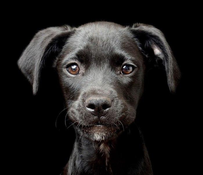 Te lo creas o no, existe un concurso fotográfico canino. Y esgenial…
