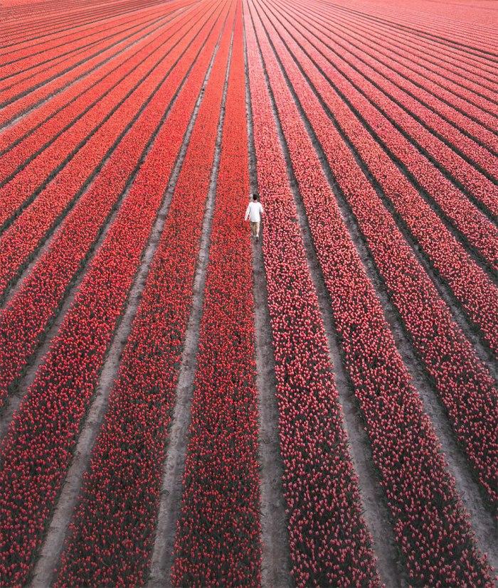¿Quieres ver 7 millones de flores entechnicolor?