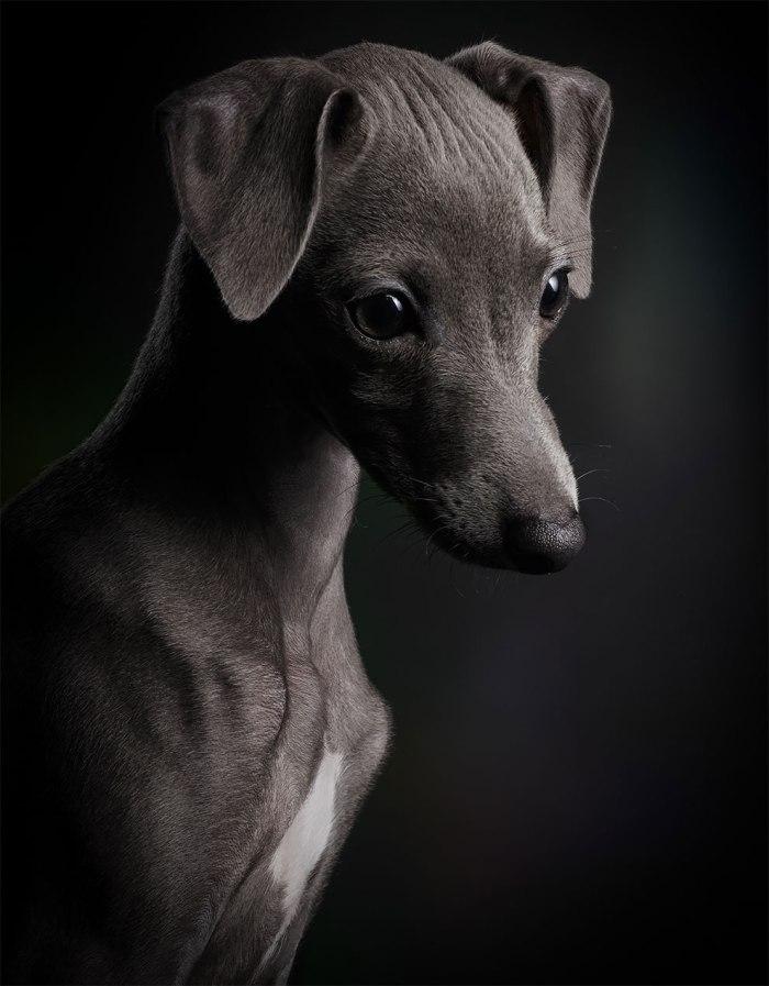 Miradas irresistibles para un concurso de fotografía animal comopocos…